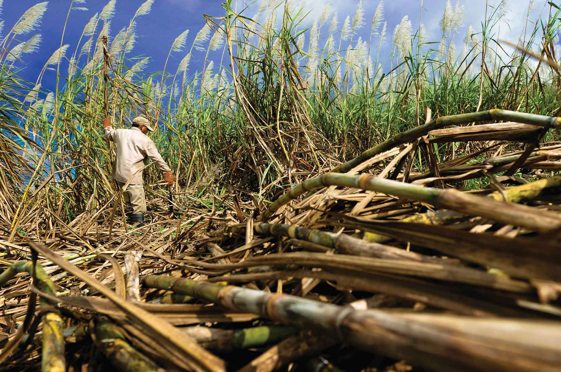 Sugar Cane Industry Technology